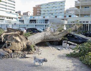 Leslie: Bonança parcial depois da tempestade no distrito de Coimbra