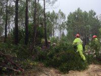 Governo disponibiliza 5,5 ME para apoiar empresas do setor florestal