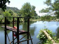Abate de árvores polémico nas margens do rio Ceira na Lousã