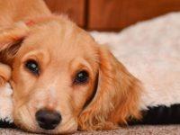 Governo quer criar Sistema de Informação de Animais de Companhia para prevenir abandono