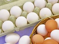 ASAE apreende mais de 400 mil ovos na região Centro