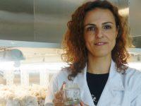 Investigadores de Coimbra identificam processo chave na clonagem de plantas