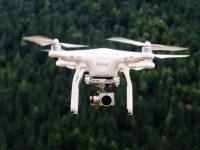 Projeto europeu recorre a drones e satélites para deteção de pragas florestais
