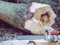 Queda de árvore provoca ferimentos graves a homem em Penela