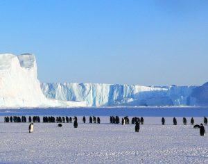Cientistas polares de 12 países reunidos em Coimbra com Antártida na agenda