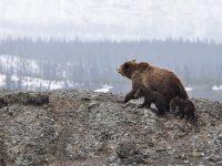 Altas temperaturas provocaram mais de 100 incêndios no Ártico