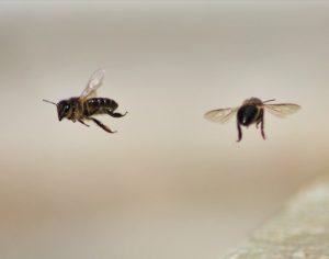 Homem morre em Cantanhede após ter sido picado por vespas ou abelhas