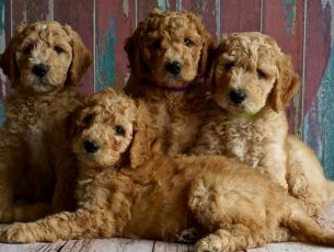 Animalife quer apoio às famílias carenciadas com animais para evitar abandonos