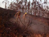 Incêndios: Região de Coimbra volta a proibir uso do fogo durante o período crítico
