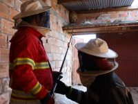 Proteção Civil de Miranda do Corvo já destruiu mais de 230 ninhos de vespa asiática