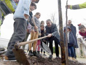 Alameda  da Conchada ganha  novas  árvores