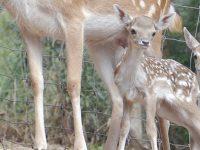 Descobrir em família a vida selvagem em Miranda  do Corvo