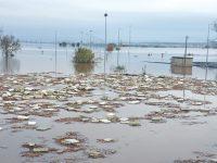 Cheias do Mondego deixam 25 trabalhadores agrícolas sem ocupação