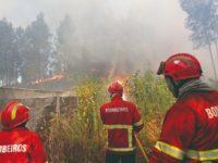 DR- Incêndios começaram a 8 de julho, junto à localidade de Mamarrosa