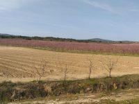 Covid-19: Agricultores de Castelo Branco reivindicam apoio que se adapte à realidade agrícola