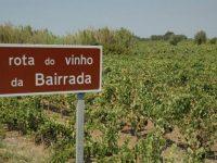 """Bairrada ultrapassa de 20 milhões de litros de vinhos em """"ano de muito boa qualidade"""""""