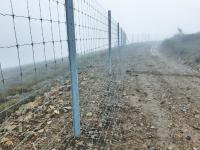 Vários quilómetros de cercado biológico para estudar veados e javalis