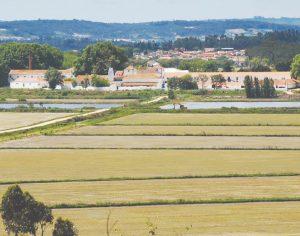 Burlona engana médica e empresários agrícolas