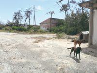 Figueira da Foz: Construtor compra terrenos da Alberto Gaspar