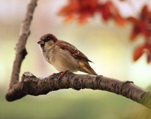 Montemor-o-Velho desenvolve projeto de observação de aves no Paul do Taipal